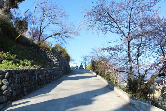 桜 宝寿院 参道
