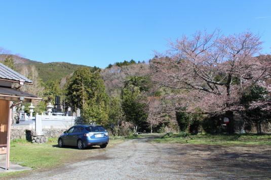 桜 原間のイトザクラ 駐車場
