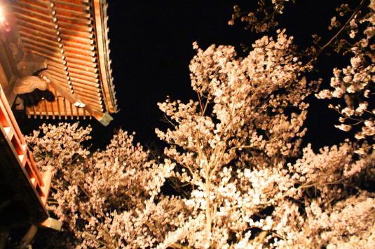 桜 宝寿院 ライトアップ 鐘楼2