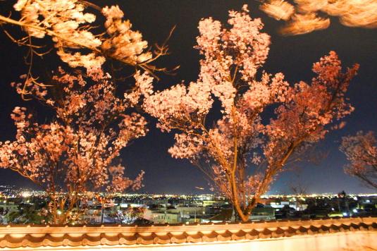 桜 宝寿院 ライトアップ 夜景
