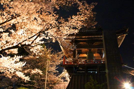 桜 宝寿院 ライトアップ 鐘楼3