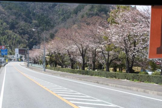 桜 久遠寺 シャトルバス景色