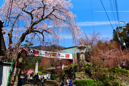 桜 久遠寺 三門前