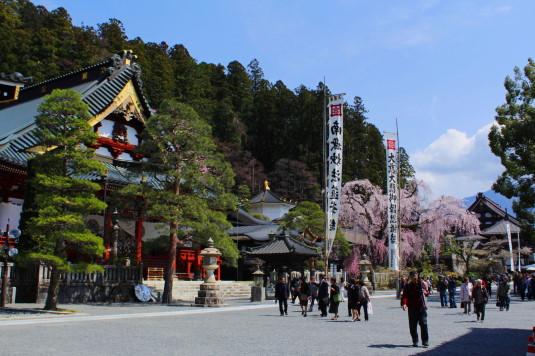 桜 久遠寺 境内