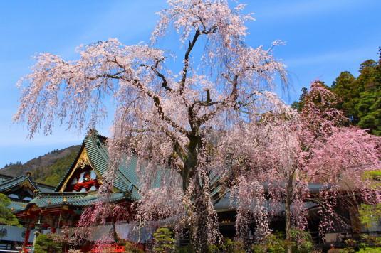 桜 久遠寺 外観
