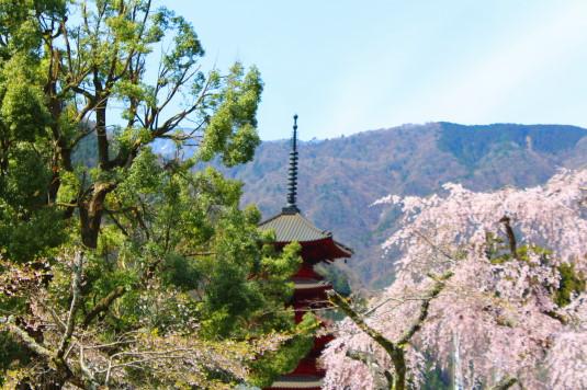桜 久遠寺 五重塔