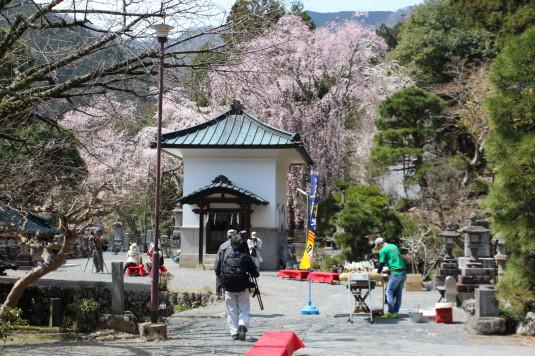 桜 身延山 休憩どころ