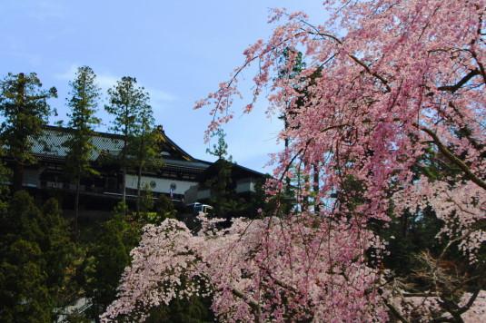 桜 身延山 久遠寺と桜