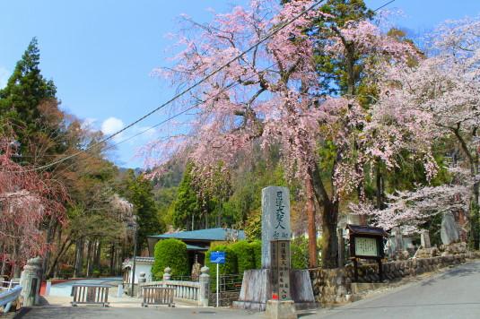 桜 身延山 御廟所 入口