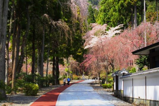 桜 身延山 御廟所 道