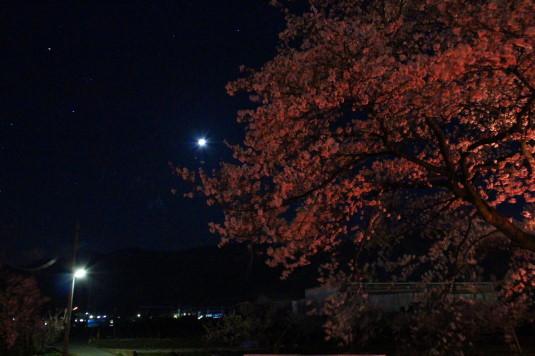 桜 徳島せぎ 月明かり