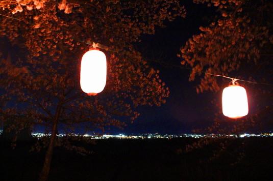 桜 徳島せぎ 夜景