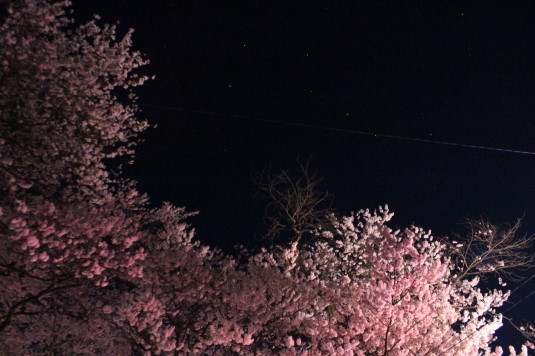 桜 妙了寺 北斗七星
