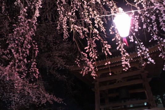桜 妙了寺 鐘