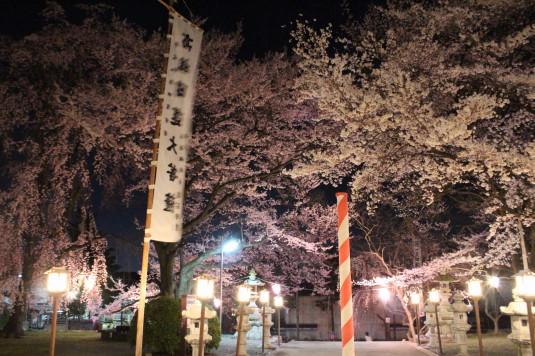 桜 妙了寺 境内