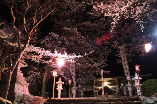 桜 妙了寺 本堂
