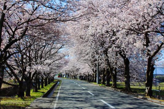 憩いの桜通り 外観