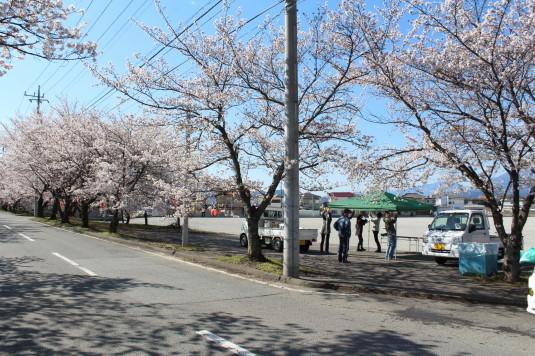 憩いの桜通り 駐車スペース