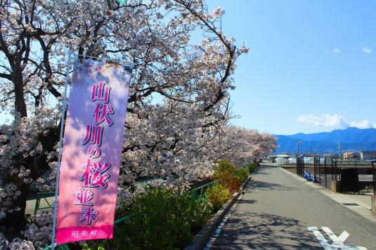 桜 山伏川桜並木 外観