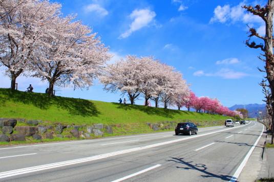 桜 荒川下流 外観