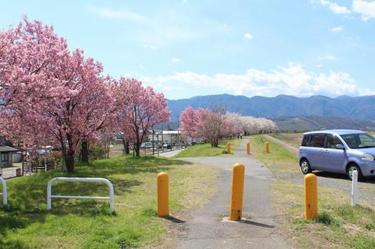 桜 荒川下流 駐車場