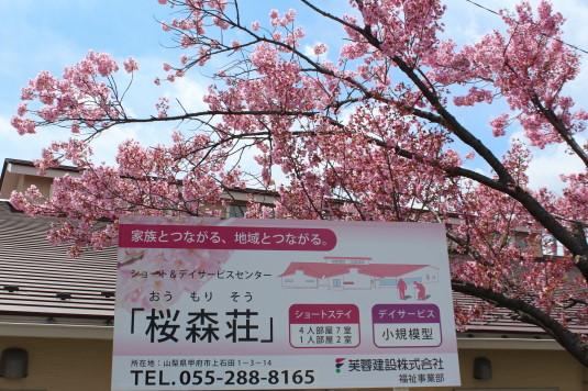 桜 貢川 宣伝
