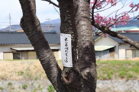 桜 貢川 ネーム