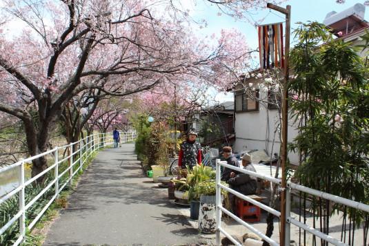 桜 貢川 休憩所