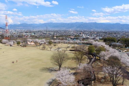 桜 ドラゴンパーク 全体