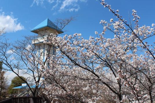 桜 ドラゴンパーク 外観