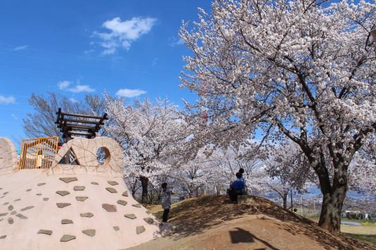 桜 ドラゴンパーク 花見客
