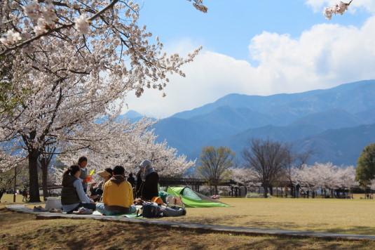 桜 ドラゴンパーク