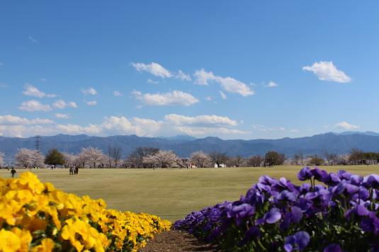 桜 ドラゴンパーク 桜と富士山と花