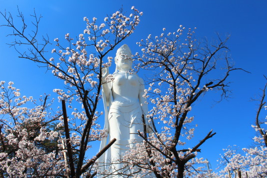 桜 平和観音 桜