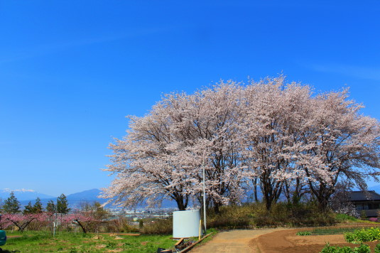 桜 中央市高部 単体