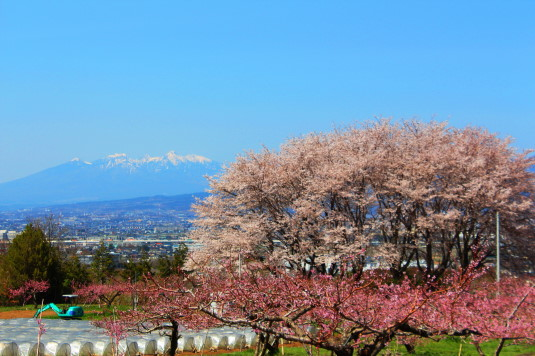 桜 中央市高部 外観
