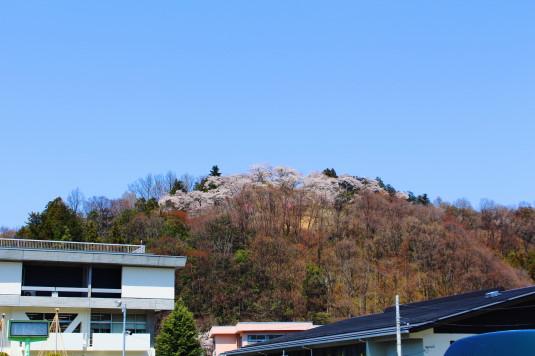 桜 勝山城跡 全体