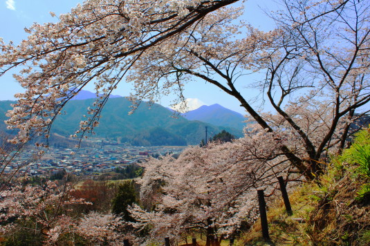 桜 勝山城跡 外観