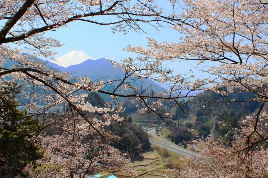 桜 勝山城跡 高速道路