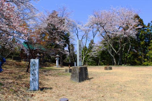 桜 勝山城跡 本丸