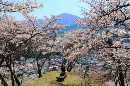 桜 勝山城跡 本丸 桜