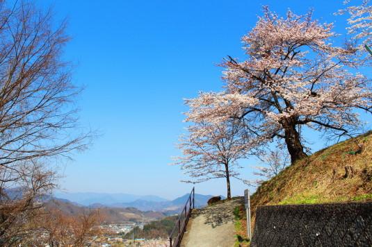 桜 鹿留水力発電所 頂上 桜