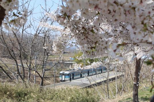 穴山さくら公園 桜と電車