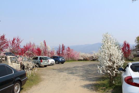 まるきた花桃園 駐車場