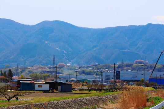 桜 中央市高部 全体