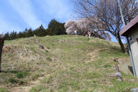 桜 乙ヶ妻 近道コース 斜面