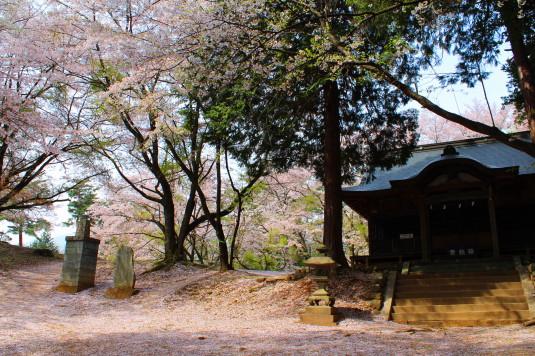 新府城跡 神社と桜