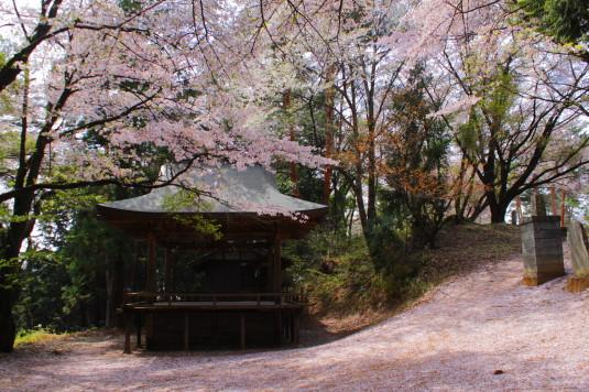新府城跡 神楽と桜