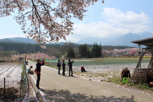真原の桜並木 撮影ポイント