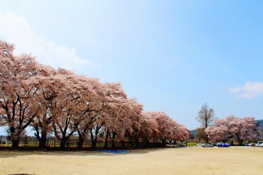 桜 三代校舎 校庭